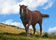 Pferd_01.jpg