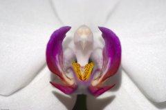 orchidee_1.jpg